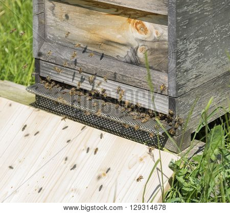 sunny scenery showing a wooden beehive with bees flying around
