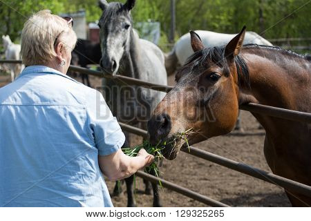 Woman feeding horse from hand green grass