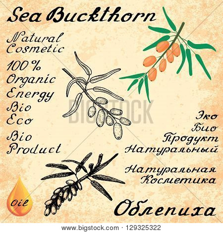 Sea buckthorn. Vector set of 3 drawing and hand-lettering. In English and Russian texts. Eco Friendly. For labels flyers online stores. Natural cosmetic. Bio products. Food spices