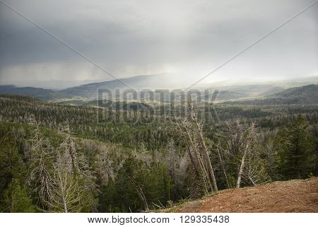 View of forested hills on the ramparts trail in Cedar Breaks National Monument Utah with overcast sky and rain in the distance