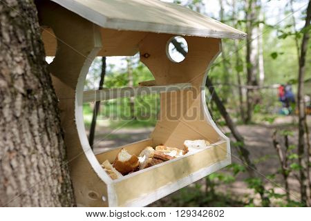 Wooden bird feeder with bread in the park