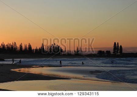 Evening scene at the beach in Port Macquarie Australia. Ocean beach and silhouettes of trees.