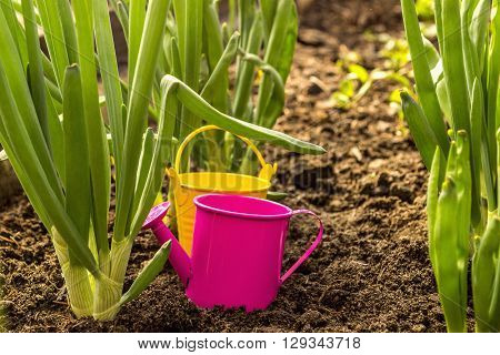 Spring onions and pail with sprinkling can