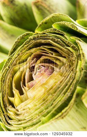 Fresh cut green artichoke flower macro shot