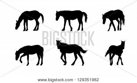 Horse Runs, Hops, Gallops Isolated on White Background. EPS10