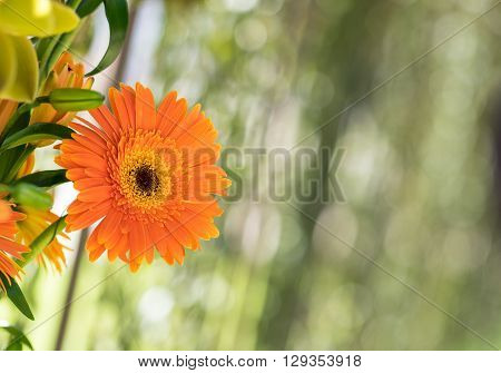 Flower composition on the blured green background. Composition is made of gerber and lilies