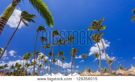 Bungalows and blue sky with palms in Aruba resort