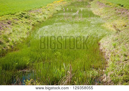 The river in the field overgrown with grass forest away