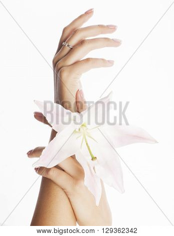 beauty delicate hands with manicure holding flower lily close up isolated on white perfect shape for spring