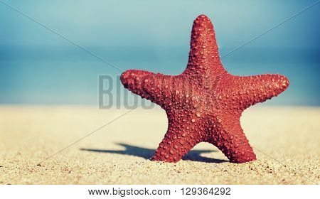 Starfish Beauty Beach Travel Animal Concept
