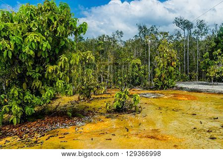 Khao Pra Bang Khram Wildlife Sanctuary way to Emerald Pool aka Sa Morakot tourist destination. National Park Krabi Thailand. Green tropical forest Southeast Asia. Yellow and orange soil