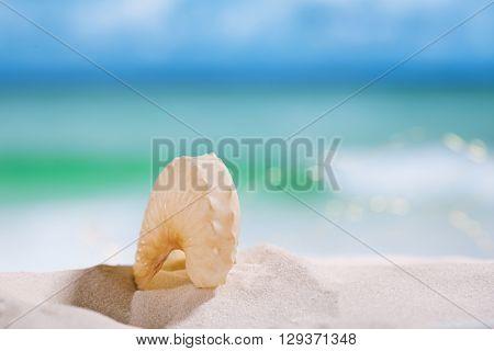 nautilus paper shell on white sandy beach under the sun light, shallow dof