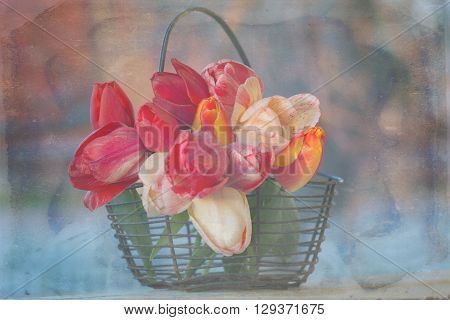 A distressed photo of colorful tulips in a  balck wire basket.