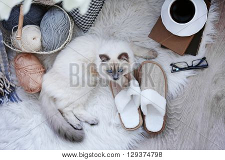 Color-point cat with slippers lying on a floor in living room