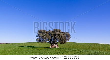 Prehistoric dolmen under a Cork Oak, in the Alentejo region. Portugal.