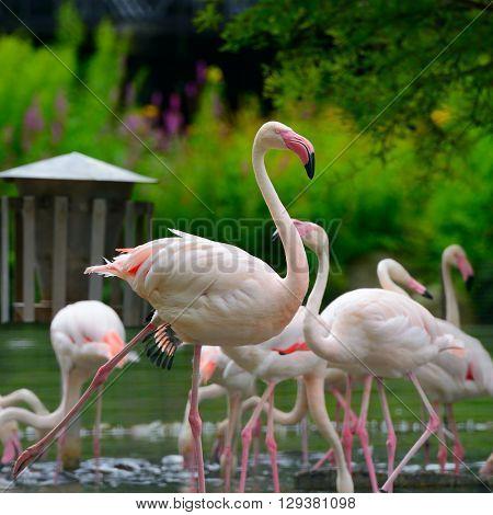 flock of flamingos on lake