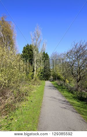 springtime landscape with a tarmac cycle track surrounded by colorful trees under a blue sky