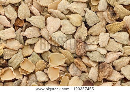 Macro closeup background texture of Organic Egyptian senna, Tinnevelly senna, East Indian senna (Senna alexandrina) Seeds.