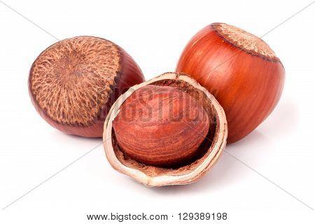 Three hazelnuts isolated on white background close-up macro.