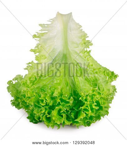 Salad leaf. Fresh lettuce one leaf isolated on white background closeup. Green vegetable lettuce