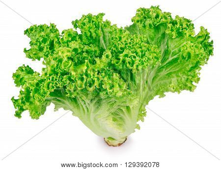 vertical sheaf of green fresh lettuce closeup isolated on white. Healthy food vegetable green organic salad