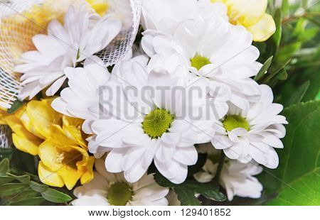 Bouquet of white chrysanthemum flower. Detailed natural scene. Holiday symbol. Beauty in nature. Pistils and petals.