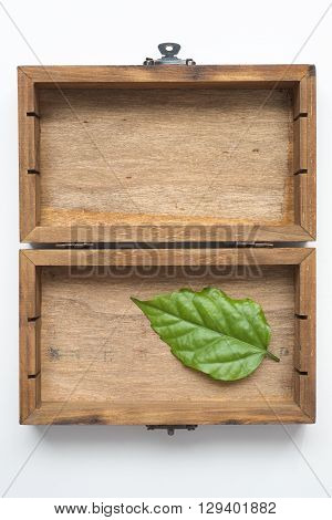 fresh green leaf in vintage wooden box