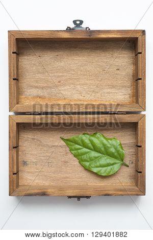 fresh green leaf in vintage wooden box