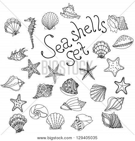 Sea shell, starfish, seashell, nautilus sea fauna ocean aquatic underwater uncolored vector set. Hand drawn marine seashell marine coloring book stlyle illustration of sea shells on white background.