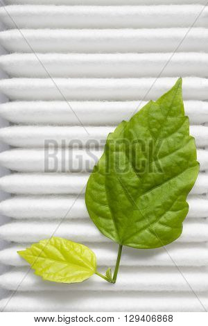 air purity concept with fresh green leafs on white filter surface