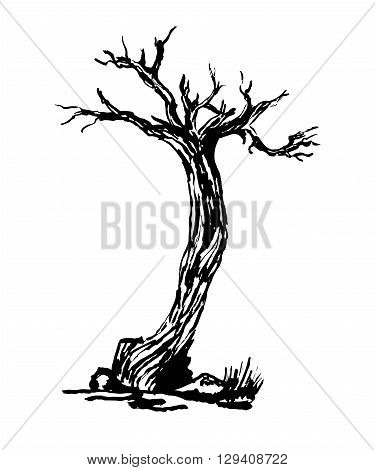 drawing old dry gnarled tree graphic ink isolate sketch vector illustration