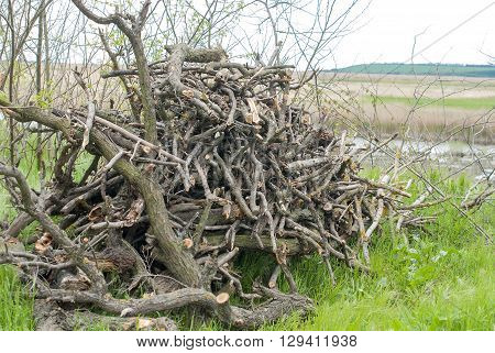 Big pile of trimmed and dried tree branches as a texture