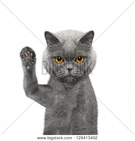 Cute cat is greeting you -- isolated on white