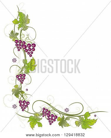 Filigree vine leaves with grapes, vector decoration, green and purple.