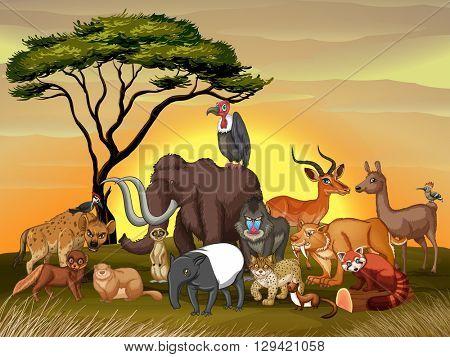Wild animals in the savanna field illustration