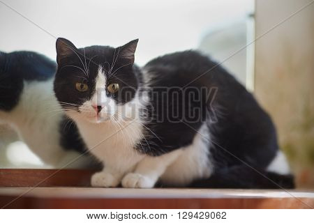 The cat of a black-and-white color sits near a mirror.
