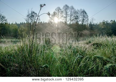 sunrise in the meadow and the spiderweb