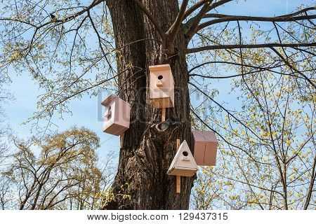 Spring landscape with a birdhouse and starling