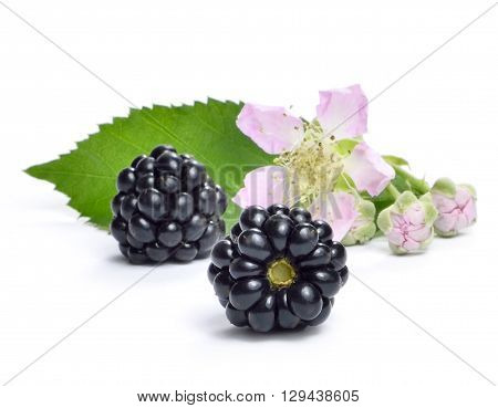Fresh blackberry with flower, leaf and copy space. Ripe blackberries isolated on white background.