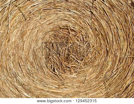 Deatails of a Round bale of hay after harvesting