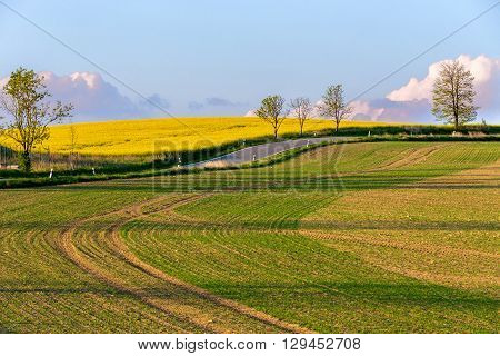 Beautiful Summer Rural Landscape
