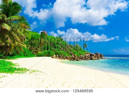 Jungle Shore Tranquility