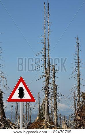 Bark Beetle Zone At Mount Rachel