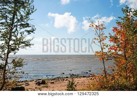 Landscape With Trees On Baltic Sea Coast