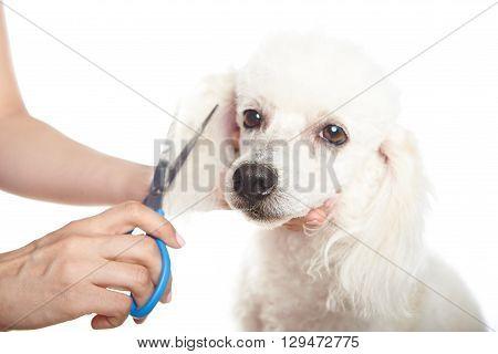 Dog Barber Shop