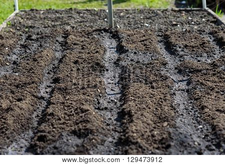 Dig And Loosen Soil Surface On A Bed Prepared For Planting Seeds
