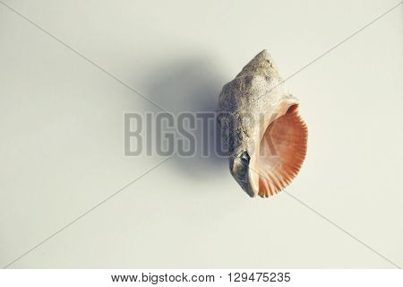 beautiful mollusk shell on white table and color effect