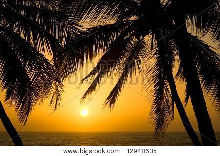 Tropical Palm Tree Sunset