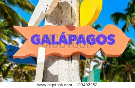 Galapagos signpost with a trees