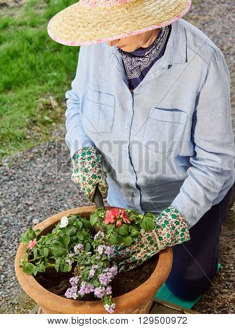 Mature woman gardening and she planting flowers